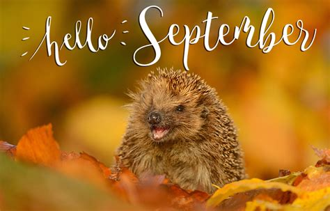 Have a happy first day of september with these new Hello September images - YouLoveIt.com