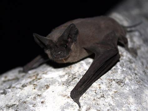 discover  largest urban bat colony  austin tx