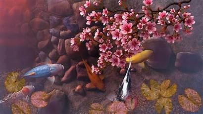 Koi Pond Screensaver 3d Sakura Wallpapers Wallpaperaccess