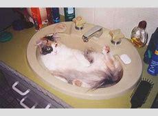 Katzen sind voll Süß Lustige Katzenbilder