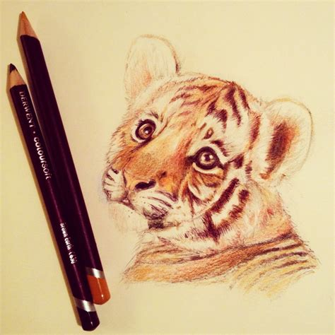cute animal drawing tumblr