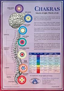 An A3 Poster That Details The 7 Chakras Of The Body With