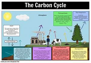The Carbon Cycle Diagram Storyboard By Oliversmith
