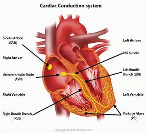 Where In The Heart Is The Sinoatrial Node Located