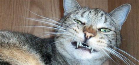parts  cat anatomy  crack   catster