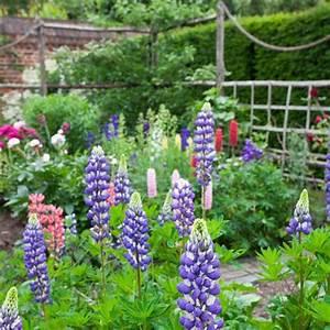 Country Garden Design : lupins and peonies country gardens ~ Sanjose-hotels-ca.com Haus und Dekorationen