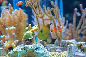 Aquarium Selber Bauen Plexiglas : plexiglasaquarium selber bauen so geht 39 s ~ Watch28wear.com Haus und Dekorationen