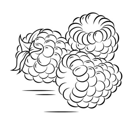 raspberry bush clipart black and white kolorowanka trzy maliny kolorowanki dla dzieci do druku