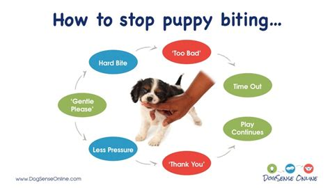 How To Stop Puppy Biting  Go Anywhere Dog™ Minneapolis