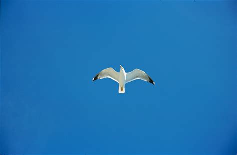 jonathan livingston seagull quotes quotesgram