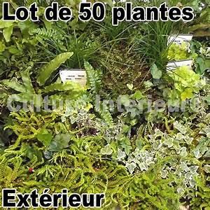 Mur Vegetal Exterieur : lot de 50 plantes pour mur v g tal ext rieur mat riel ~ Melissatoandfro.com Idées de Décoration