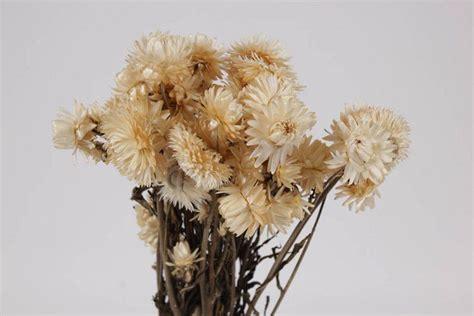 trockenblumen trockenblumenvanderspekde