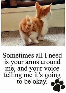 Cute Cat Quotes. QuotesGram