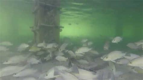 underwater  stiltsville fla key biscayne bay youtube