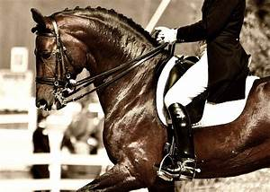 Dressage Horse Photography