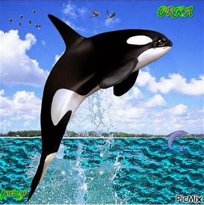 Orka Picmix
