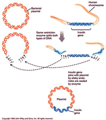 Modification To Dna by Genetic Engineering Timeline Timetoast Timelines