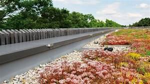 Alternative Zu Kies 3 : extensive dachbegr nung zinco dach systeme ~ Bigdaddyawards.com Haus und Dekorationen