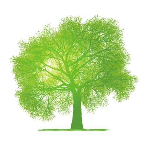 creative green tree design vector graphics 02 vector plant free