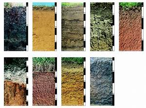 soil samples   Different soils showing their different ...