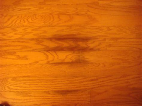 Urine Wood Floors Remove by Does Urinefree Remove Black Stains Caused By Urine On