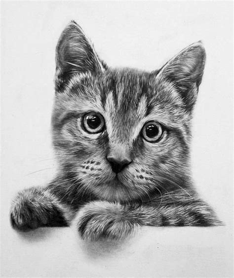 realistic drawing  cat google search drawing