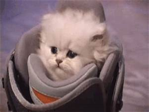 Cats Sad GIF - Find & Share on GIPHY