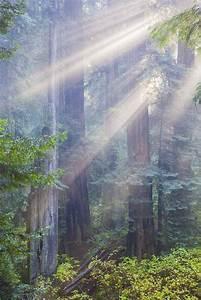 Jedediah, Smith, Redwoods, State, Park