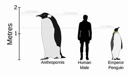 Penguins Penguin Svg Prehistoric Emperor Human Height