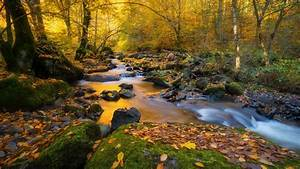 forest, with, water, stream, and, rocks, between, trees, hd, nature