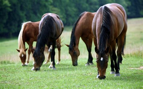 What Is In Ecr Equine Colic Relief Usa