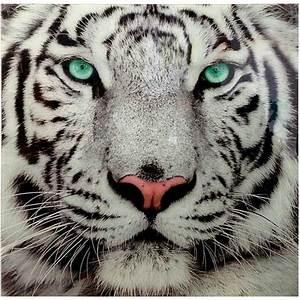 Tableau En Verre Le Tigre Blanc