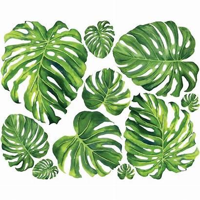 Feuilles Tropicales Nature Hojas Sticker Verdes Stickers
