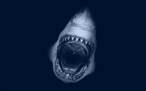 shark week wallpaper