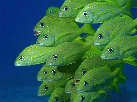 Beautiful Sea Animals Wallpapers - free hd wallpaper صور عالية الجودة beautiful