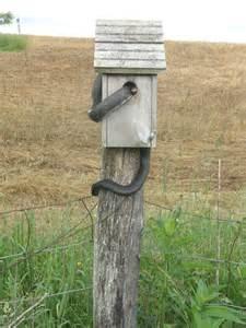 Tree Swallow Nest Boxes