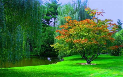 Nature Free Wallpaper by Images Wallpapers Free Gallery