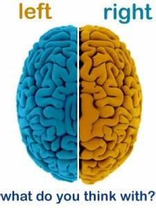 Brain Awareness: The Lateralized Brain