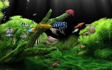 Animated Wallpaper For Air 2 - top 10 beautiful fishes for home aquarium in world top 5 ten