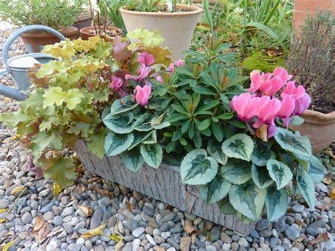 Plante De Jardinière by Jardini 232 Re Chic Pour L Automne Avec Les Mini Cyclamens
