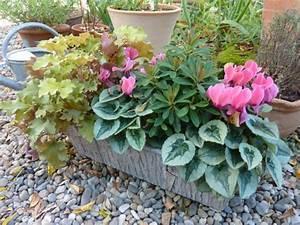 Fleur D Hiver Pour Jardinière : composition automne tout ~ Dailycaller-alerts.com Idées de Décoration