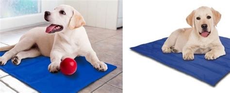 Best Doormats For Dogs by Best Cooling Mats For Dogs 2019 Recommended Mzuri Dogs