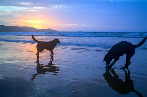 picture water beach silhouette sunrise pet dog