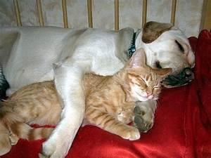 Dog And Cat Lover Nice Photos 2012 - Pets Cute and Docile