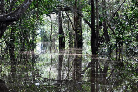 flooded amazon rainforest photograph  oliver  davis