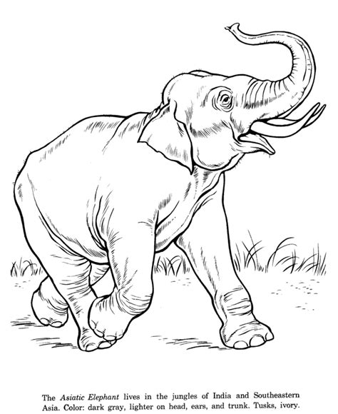 animal drawings coloring pages asian elephant animal