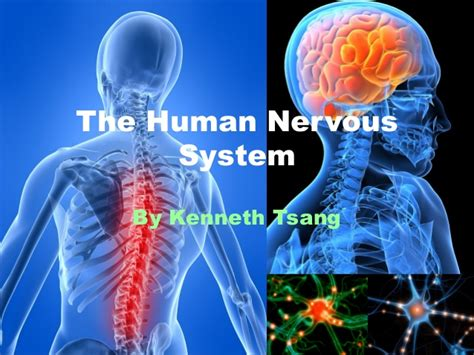 The Human Nervous System (reference