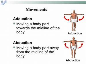 Diagram Of Adduction  U0026 Abduction Movements