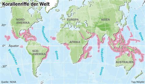 das gibt es auf der korallenstädte viel licht warmes wasser und wenig