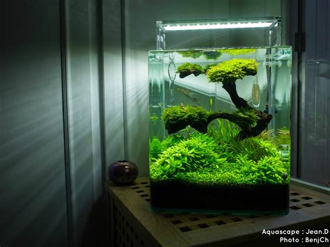 aquariums d eau douce